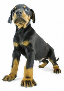 Meilleur chien de garde
